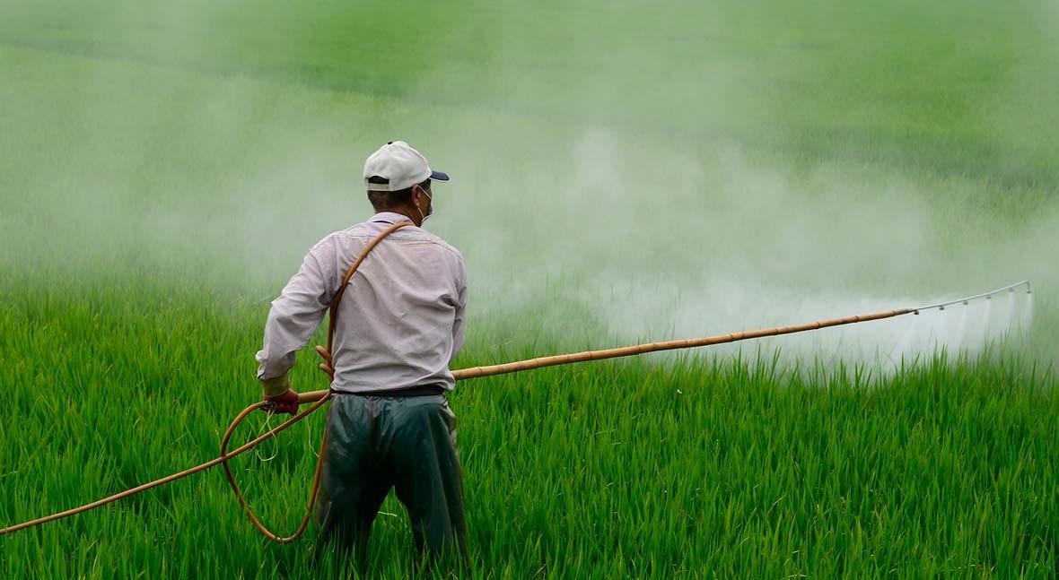 Naciones Unidas adopta límites máximos residuos más 30 pesticidas alimentos