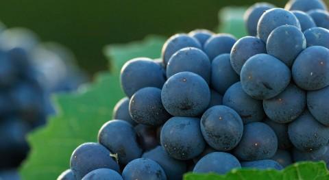 FastWine: Detección contaminantes producción vitivinícola