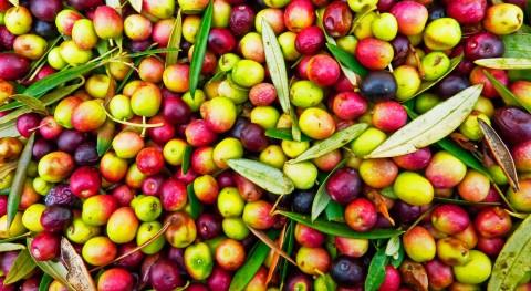 alpechines: residuo combustible beneficio economía rural