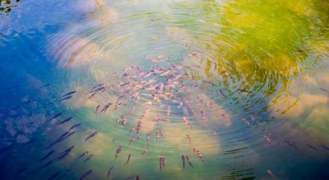 busca nuevas estrategias valorización subproductos acuicultura