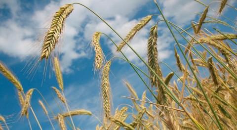 agricultores Almería buscan soluciones al reciclado plásticos agrícolas