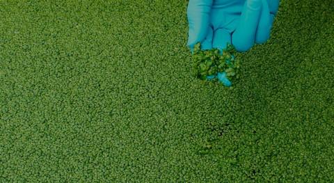 DAM y AINIA desarrollan sistema multidisciplinar valorizar residuos aguas residuales