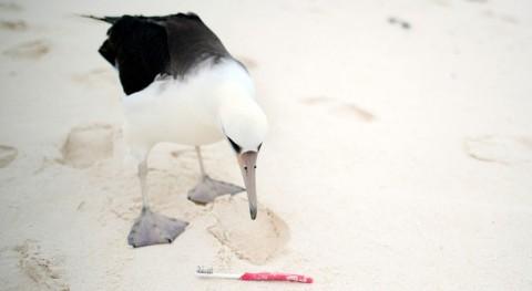 amenaza plástico especies migratorias