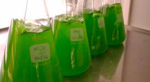 ¿Qué capacidad tienen microalgas depurar biogás y obtener biometano?
