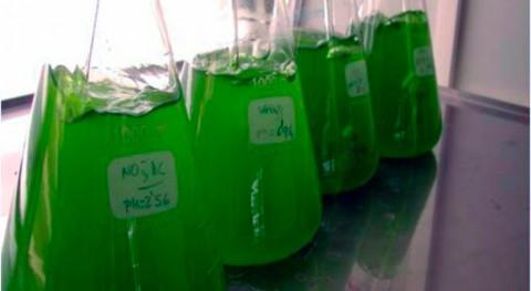 biorrefinería convertirá biomasas renovables intermediarios químicos verdes Brasil