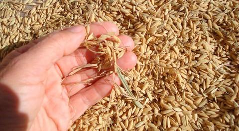 cascarilla arroz encuentra segunda vida industria médica