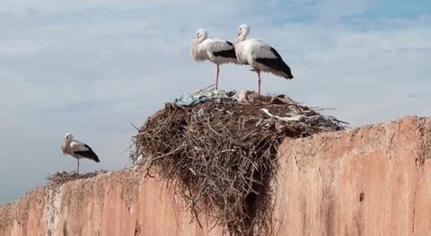 Demostrada relación Índice Huella Humana y cantidad basura nidos aves