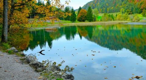 Descubierto grupo bacterias acuáticas capaces degradar cianotoxinas