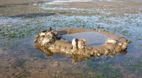 ¿ qué zonas litoral cantábrico se acumulan mayor cantidad residuos?