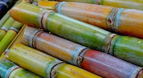 Caña azúcar y resinas, materias primas nuevo bioaglomerado sostenible
