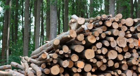 biomasa evitó emisión 3,68 millones toneladas CO2 2016 España