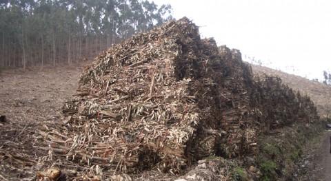 Confirmado: biomasa agroforestal es más barata que combustibles fósiles