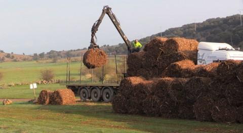 gestión sostenible matorrales y uso energético biomasa, cada vez más cerca