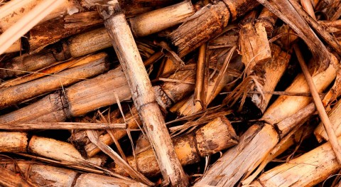 biomasa calefacción generó Euskadi negocio 49 millones 2017