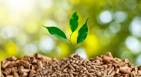 papel indispensable biomasa economía circular