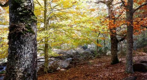 Comunidad Madrid impulsa recogida selectiva residuos espacios naturales