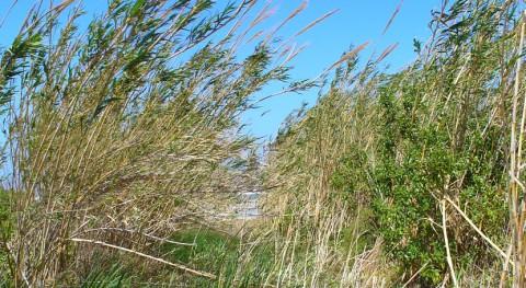 salinidad suelo, factor limitante oportunidad producir biomasa