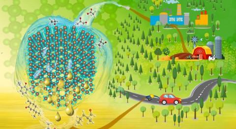 Nuevos catalizadores que aumentan valor productos obtenidos biomasa