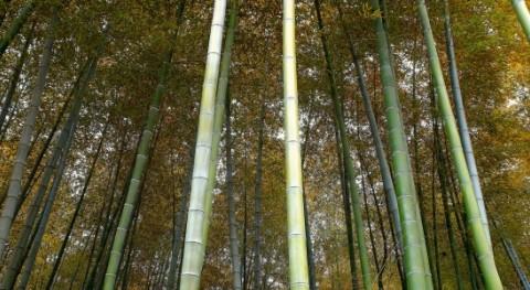 """informe """" Verde es Oro"""" analiza dimensión ambiental Plan Quinquenal China"""