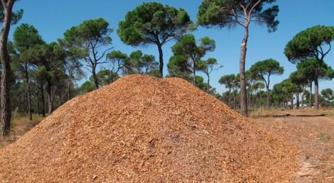 Castilla- Mancha apuesta sustitución calderas energía fósil biomasa forestal