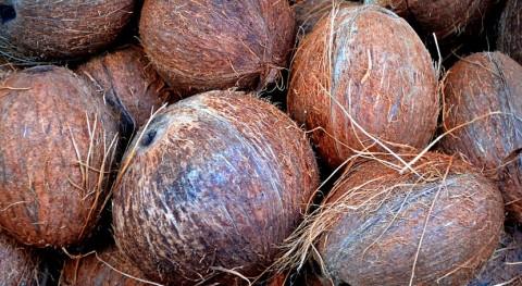 fibra coco, materia prima fabricar platos desechables biodegradables