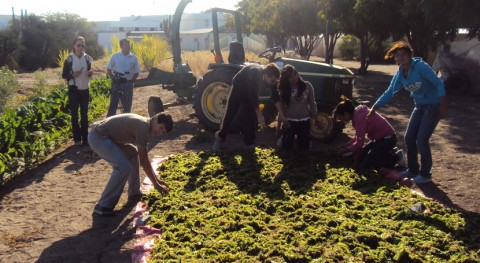 compostaje: enseñanza manejo residuos orgánicos y fomento conciencia ambiental