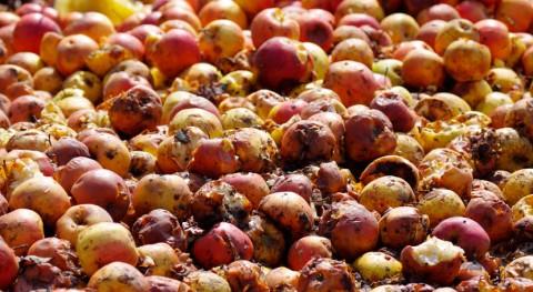 REFRESH: ¿Cómo reducir desperdicio alimentario Europa?