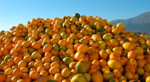 desperdicio alimentos y recursos Mediterráneo, examen