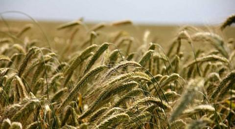 ECOWASTE4 FOOD: ¿Cómo reducir despilfarro alimenticio Europa?