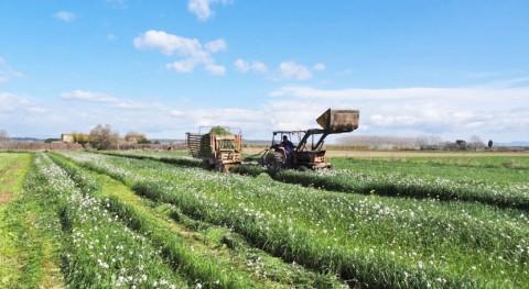 Futur Agrari: Raigrás, colza forrajera y cebada gestionar deyecciones ganaderas Cataluña
