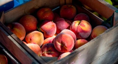 ¿Cómo lograr mejor aprovechamiento reparto excedentes alimentarios?
