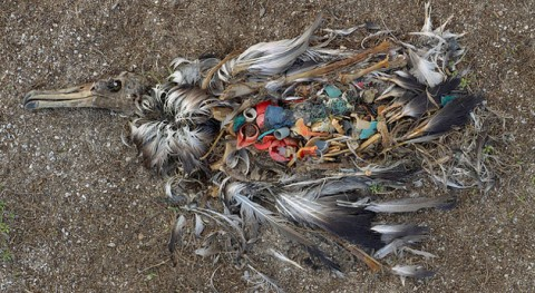 Ciencia ciudadana '1m2 playas y mares' conocer littering marino y costas