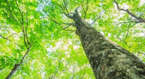 75% europeos quiere más medidas protección medio ambiente