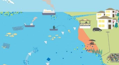 ¿Cuáles son fuentes y impactos basura marina?