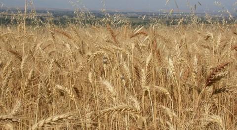 'Furfural': prometedora alternativa producción biocombustibles