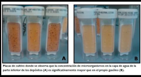 ¿Cómo evitar crecimiento bacteriano gasóleos?