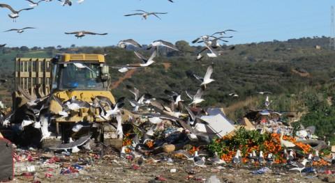 contaminación humedales, agravada desplazamientos gaviotas