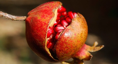 cáscara granada, materia prima desarrollar compuestos bioactivos