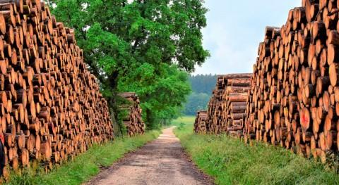 "CSIC patenta ""superenzima"" que disminuye contaminación asociada industria papelera"