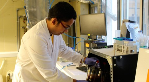 Investigadas bacterias púrpuras que transforman residuos granjas porcinas energía limpia