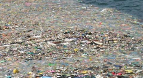 """Microplásticos, ¿ """"pan cada día"""" peces?"""