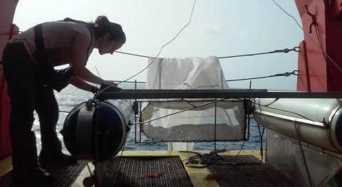 UCA y CEIMAR crean guía clasificar plásticos oceánicos color