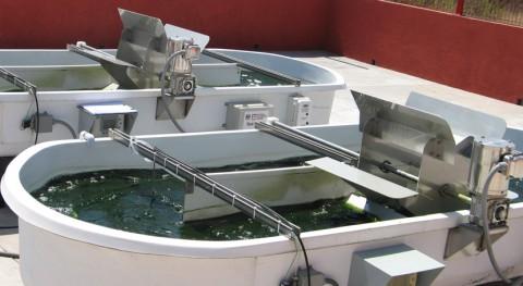 Biocombustibles partir tratamiento aguas residuales