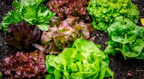 uso compost procedentes residuos orgánicos aumenta calidad lechugas y espinacas