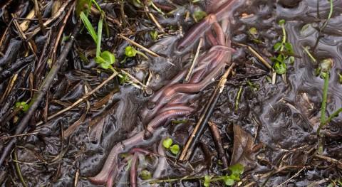 lombrices ayudan descontaminar suelos afectados lindano