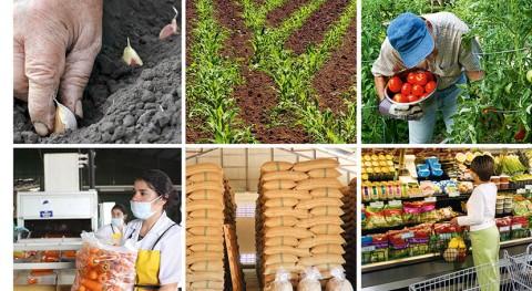  lucha mundial hambre, también hay que combatir pérdida alimentos