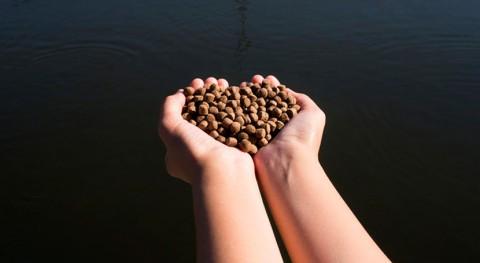¿Cómo transformar residuos forestales alimentos animales?