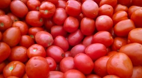 ¿Pueden microorganismos reemplazar pesticidas agricultura?