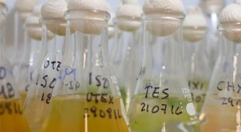 prototipo base microalgas y energía solar producirá biocombustible Ensenada