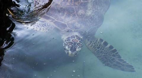 Panamá, primer país centroamericano prohibir bolsas plástico